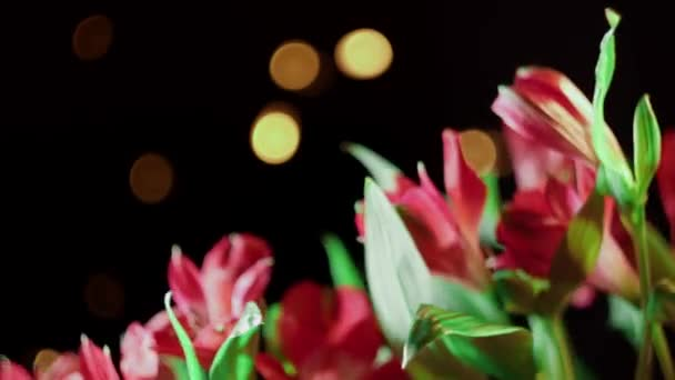 Alstroemeria and gerbera flowers with water drops on a black background