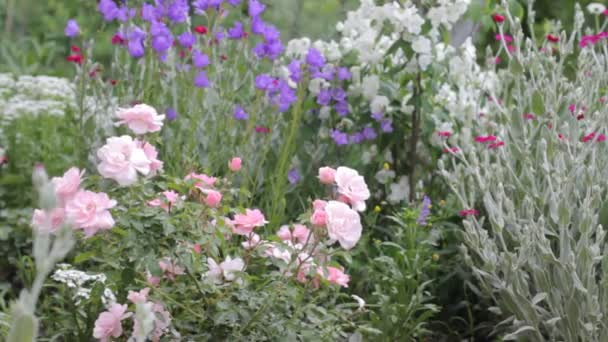 Kvetoucí růže, jasmínový květ a poupata z jiných květin v letní zahradě s lehkým větrem.
