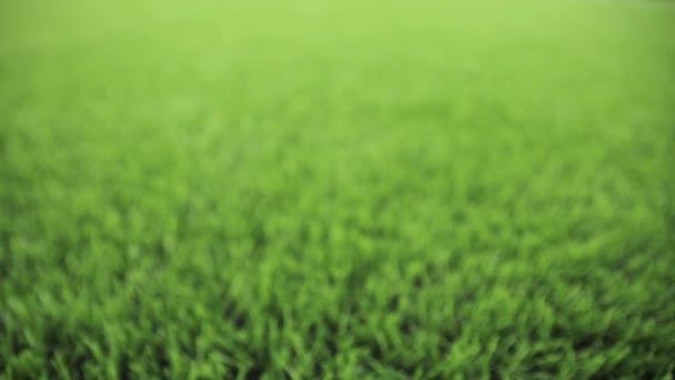 Unfocused green background. Slider shot