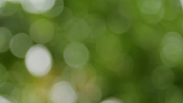 Rozostřený strom lístečky, zelené pozadí a textury