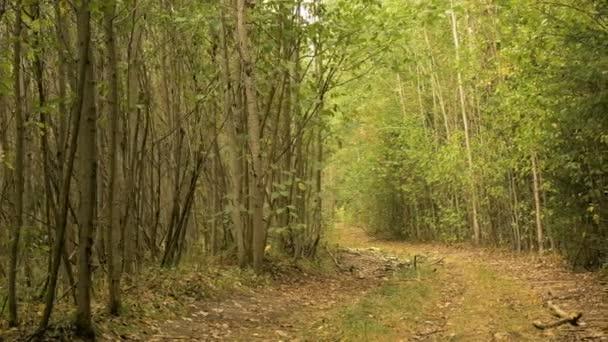 Cesta v lese. Podzimního dne. Hladké dolly zastřelil