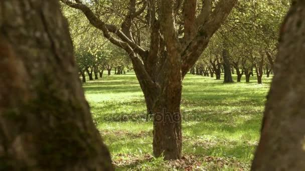 Pomocí stromu. Podzimního dne. Hladké dolly zastřelil