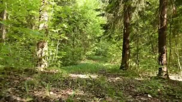 Létání v lese. Jemně a pomalu steady cam výstřel. Čisté a jasné denní