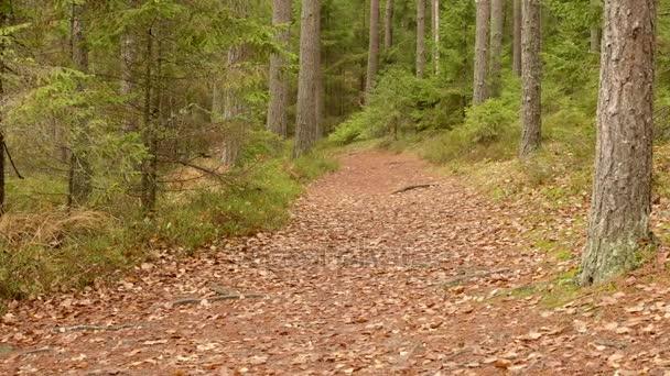 Az erdőbe. Ősszel nappali. Sima dolly lövés