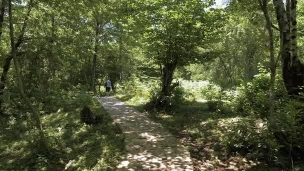 Mágikus mese, trópusi erdő, Georgia