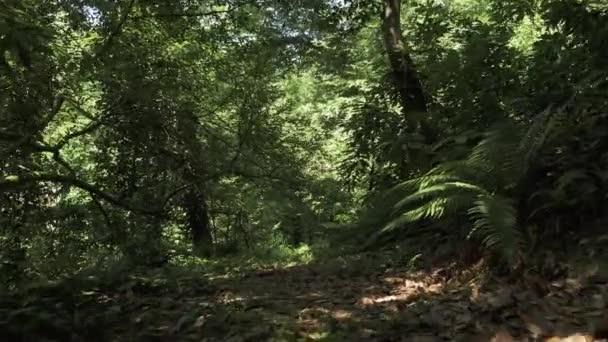 Volare nella foresta pluviale. Georgia