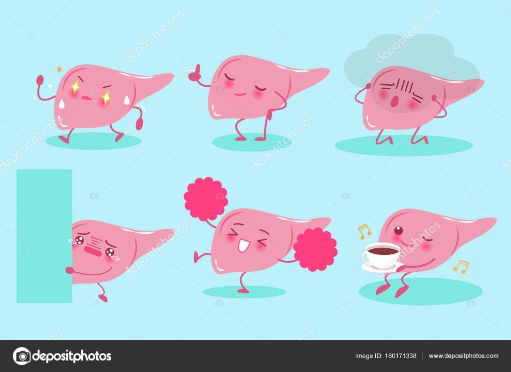 hígado de linda de la historieta — vector de stock © estherqueen999