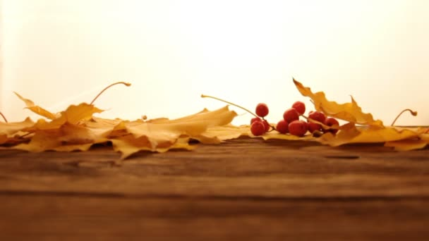 Yellow and orange fallen maple leaves with red tiny apples and ashberry on wooden table surface,white lightened background. Fall and autumn concept.