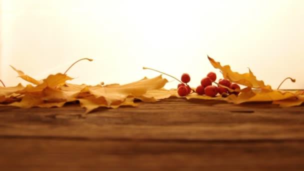 Žluté a oranžové padlé javorové listy s červenými malými jablky a ostružinovou příchutí na dřevěném povrchu stolu, bílé světlé pozadí. Podzimní a podzimní koncept. Padající listy