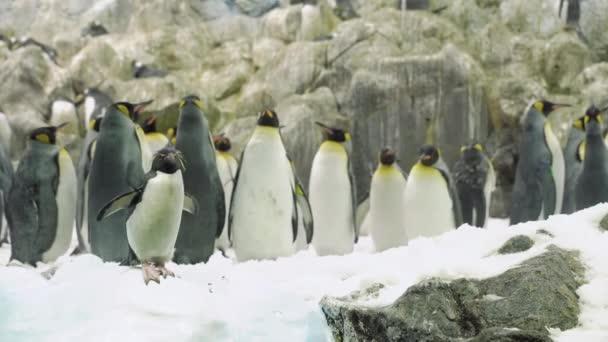 Skupina tučňáků mezi sněhem. Příroda Wild.
