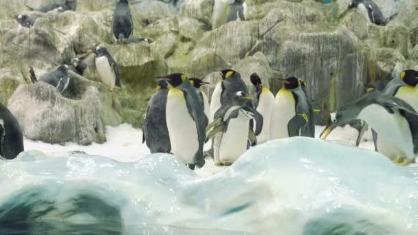 Skupina dospělých a malých tučňáčků stojící a kráčející ve sněhu