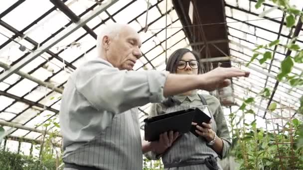 Couple of gardener checking and keeping records of plants in greenhouse