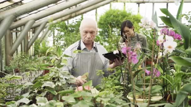 Skupina moderních zahradníků pracujících ve skleníku. Zemědělství, zemědělství a zahradnictví