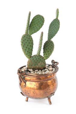 Cactus opuntia in copper pot isolated on white background. Cute houseplant succulent cactus in vintage pot