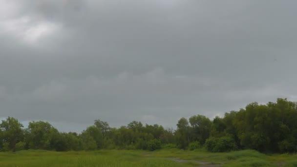 Movimiento De Las Nubes De Lluvia Sobre El Bosque Antes De Una