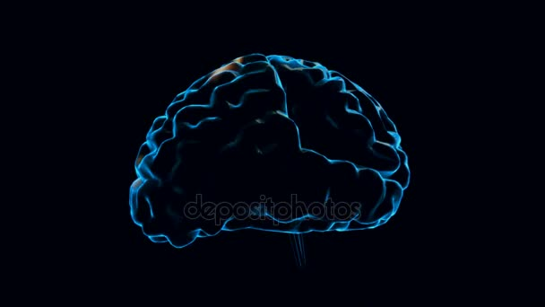 Human brain with neuronal impulses. Spinning. Loopable. Blue. Black and white. Science. More options in my portfolio.