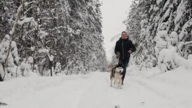 In the winter forest, a man in a black jacket and jeans runs with a Siberian husky dog, a slow-motion shot. Pine fir forest, a merry walk with a dog. Slow motion