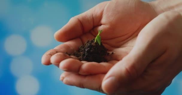 Mladý klíček v rukou farmáře. Zahradníci drží v dlaních zelené sazenice proti obloze. sladký pepřový stromek zblízka. šetrné k životnímu prostředí. ekologicky čistá planeta.
