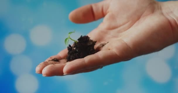Plant In Hand. Holding a young green sapling against the blue sky. The preservation of the environment