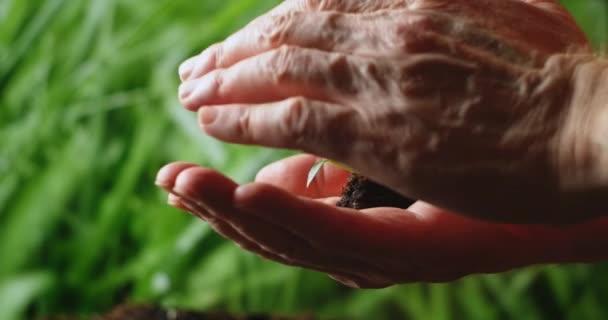 Ruka drží malý strom pro výsadbu. koncept zelený světový den Země. Ruka držící mladou rostlinu na rozmazané zelené přírodě. koncept eco earth day.