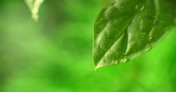 Makro. Wassertropfen. Water Drop Leaf Environmental Conservation Balance Grüne Natur. Tautropfen am Morgen auf Blatt mit Sonnenlicht