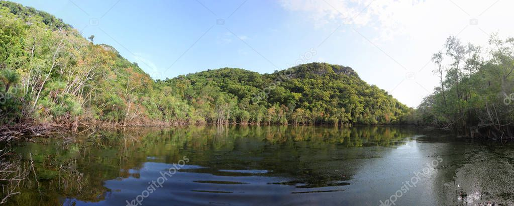 Mangrove forest and lagoon panorama