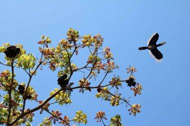 Hornbill  Birds flying on top of the tree against the sky,Wildli