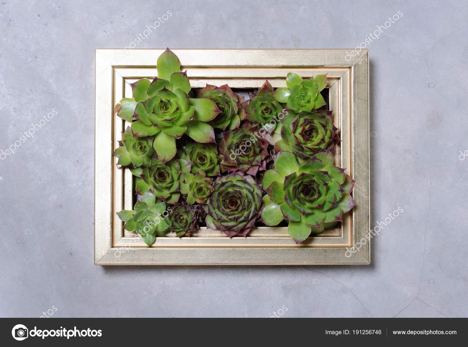 Sukkulente Pflanzen Dekoration Auf Graue Wand Stockfoto