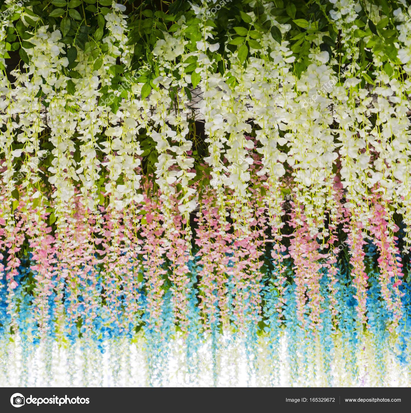 Blumen Hintergrundbild mit Frühlingsblumen blühen bunte Sommer und ...
