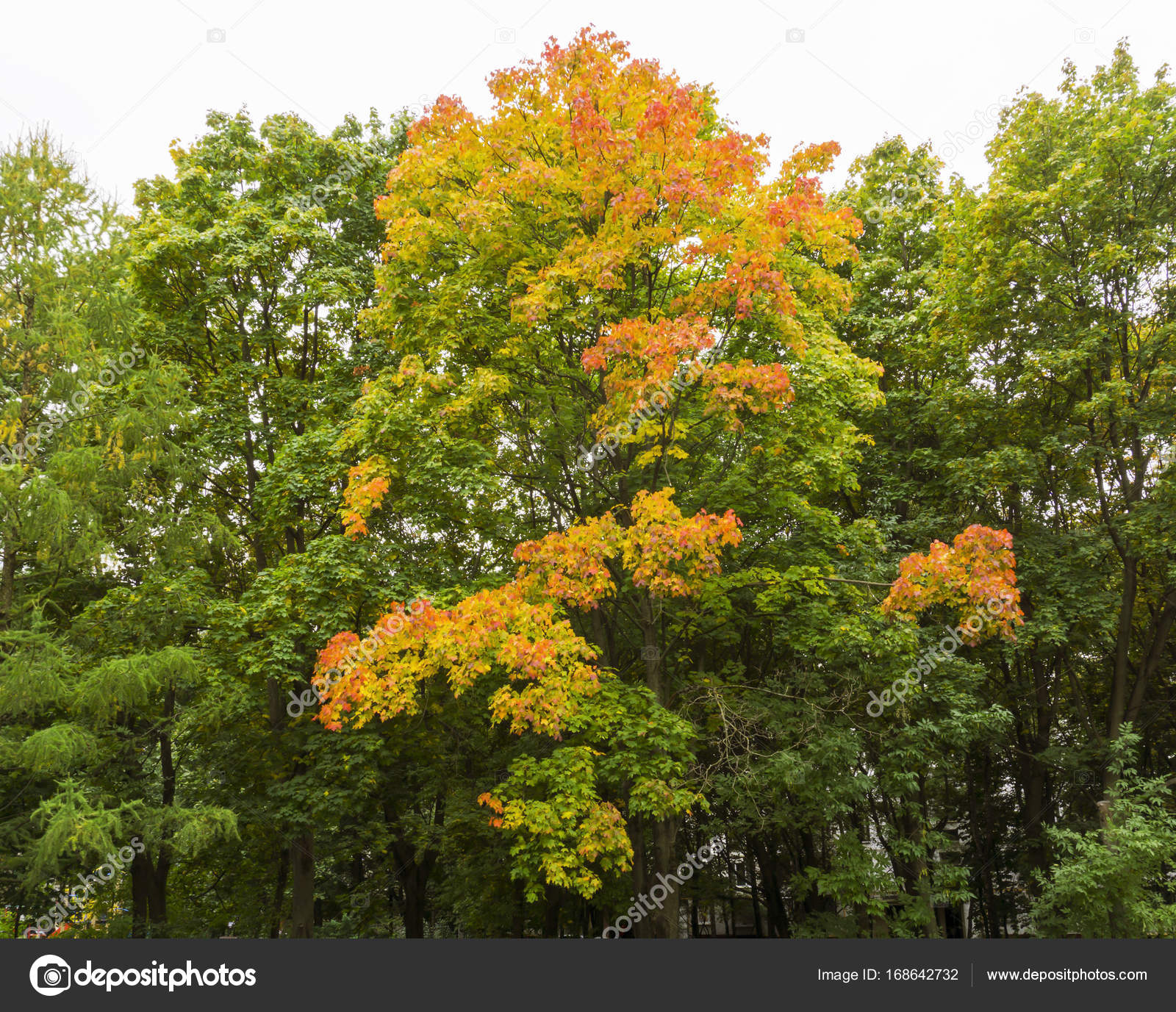 Autumn fall trees in forest with brown branches and yellow orange ...