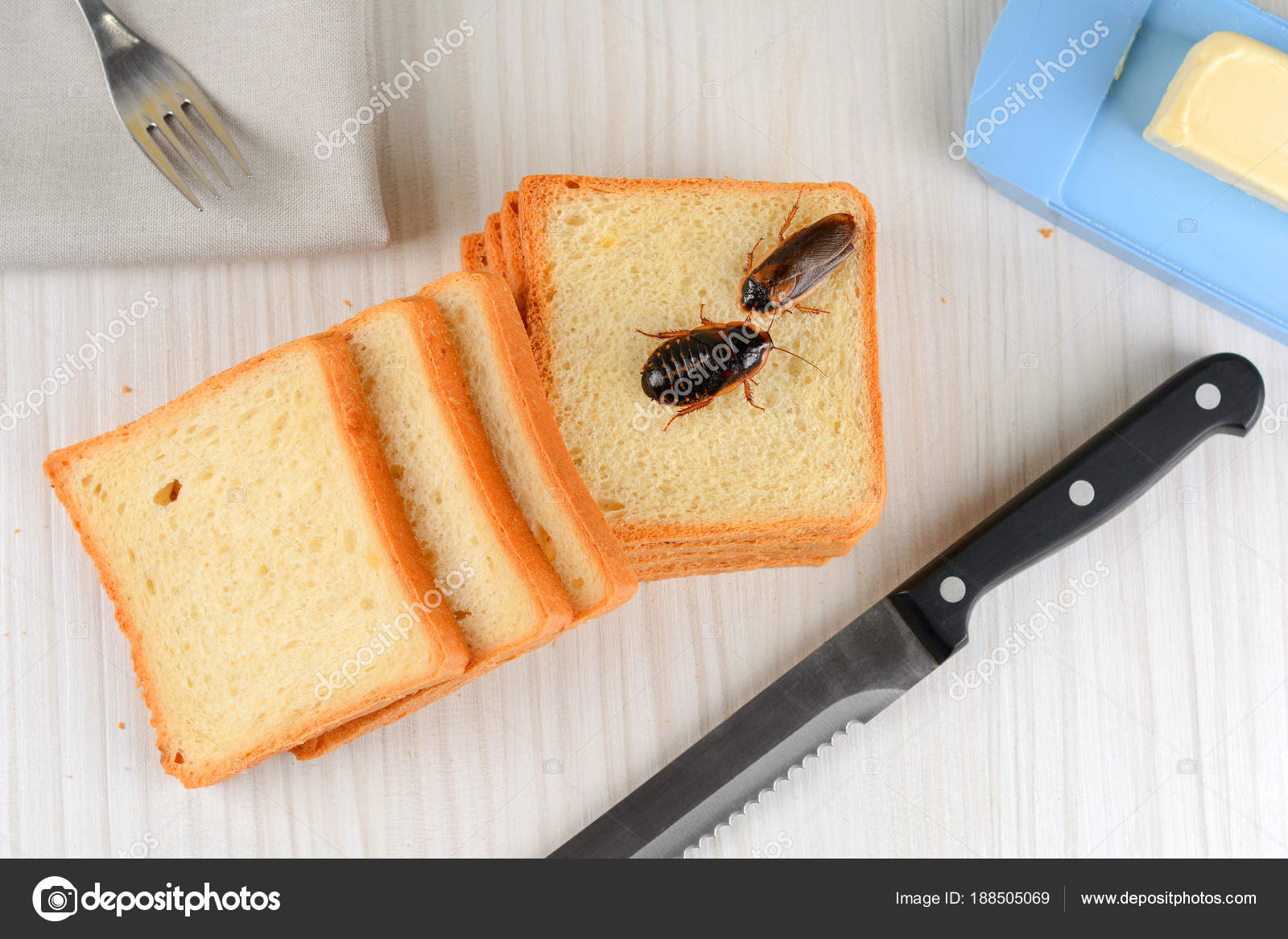 Problem House Because Cockroaches Living Kitchen — Stock ...