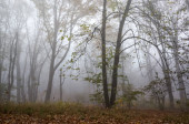 Dark trees and fallen leaves in fog during autumn