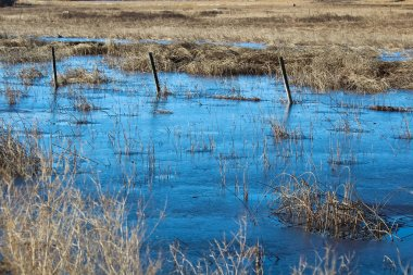 A barbed wire fence silhouette running through a frozen swamp