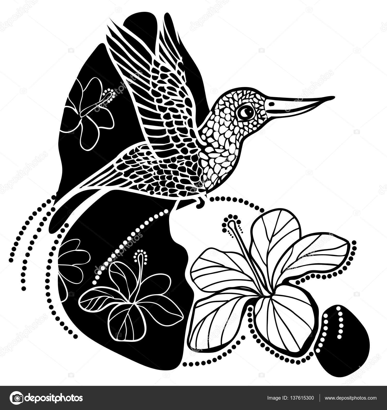 Ilustración De Colibrí En Blanco Y Negro Ilustración De Vector De