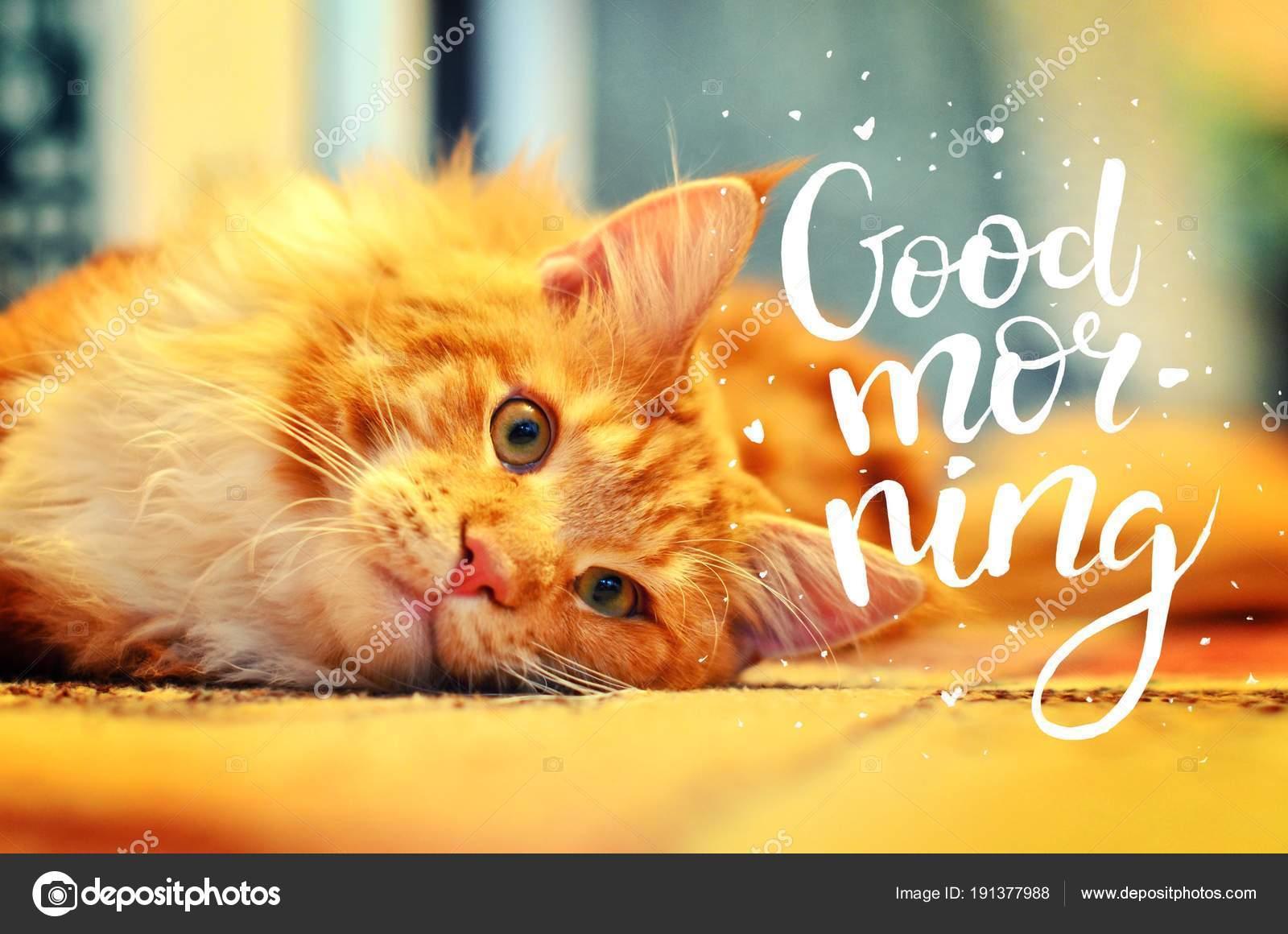 Das Konzept Ist Guten Morgen Eine Schöne Rote Katze Wachte Früh Am