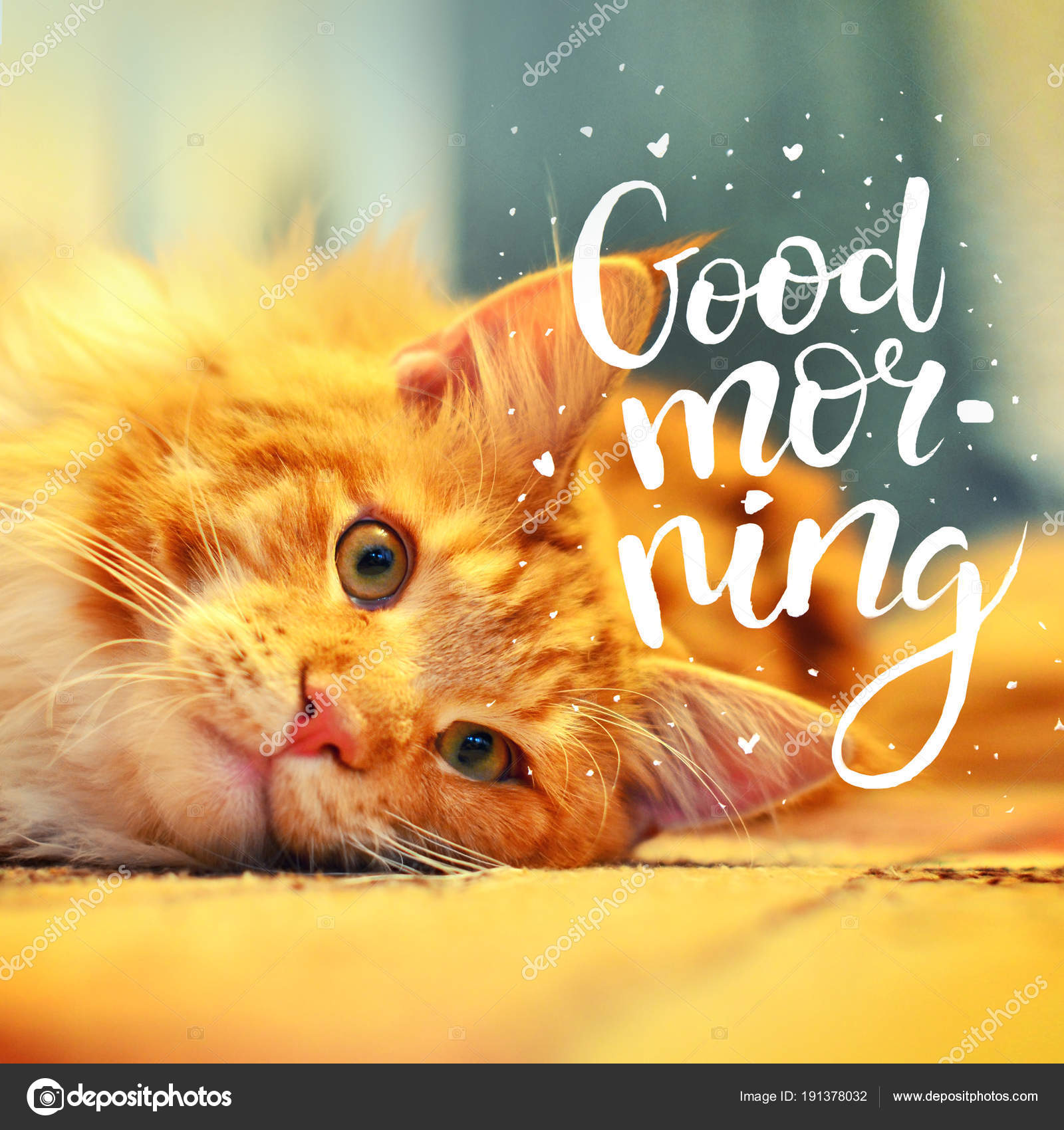 Das Konzept Ist Guten Morgen Eine Schöne Rote Katze Wachte