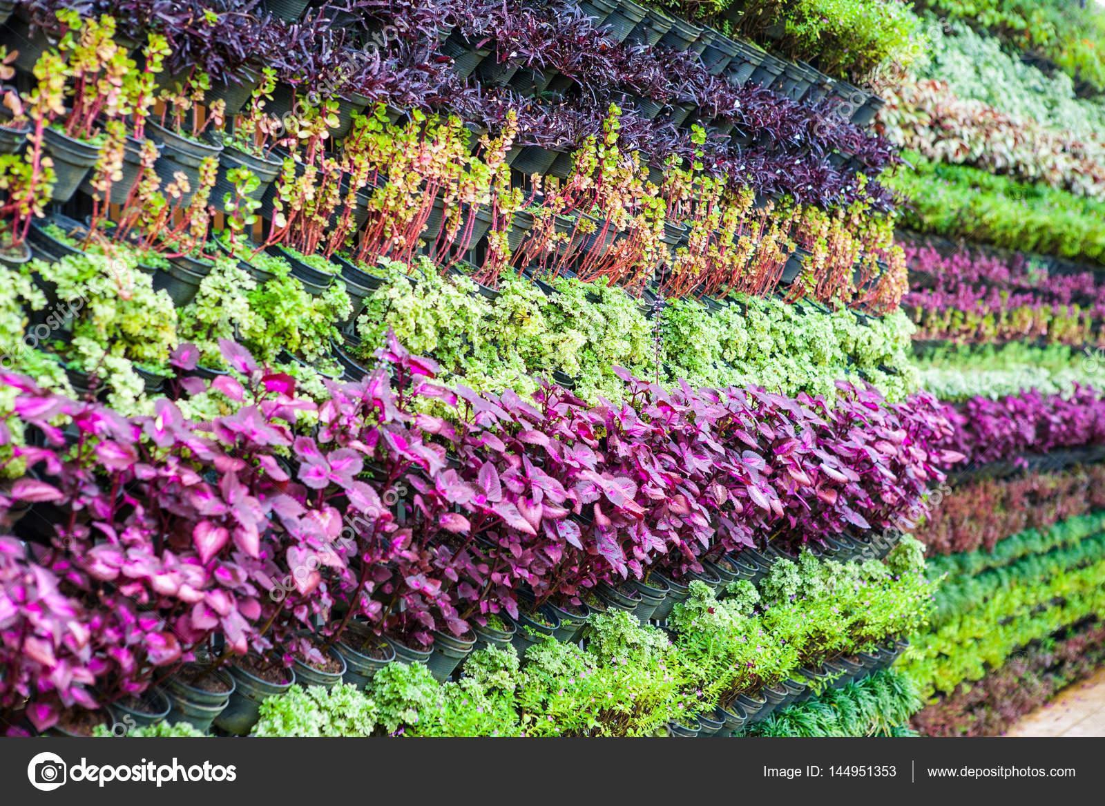 Muros De Jardin Vertical Fotos De Stock C Iammotos 144951353 - Muros-jardin