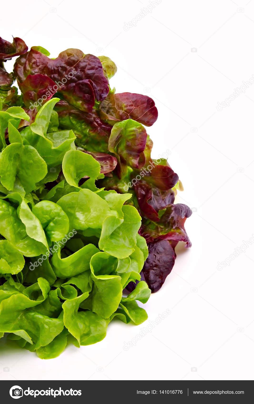 Salat Gruen Und Rot Stockfoto Frankho 141016776