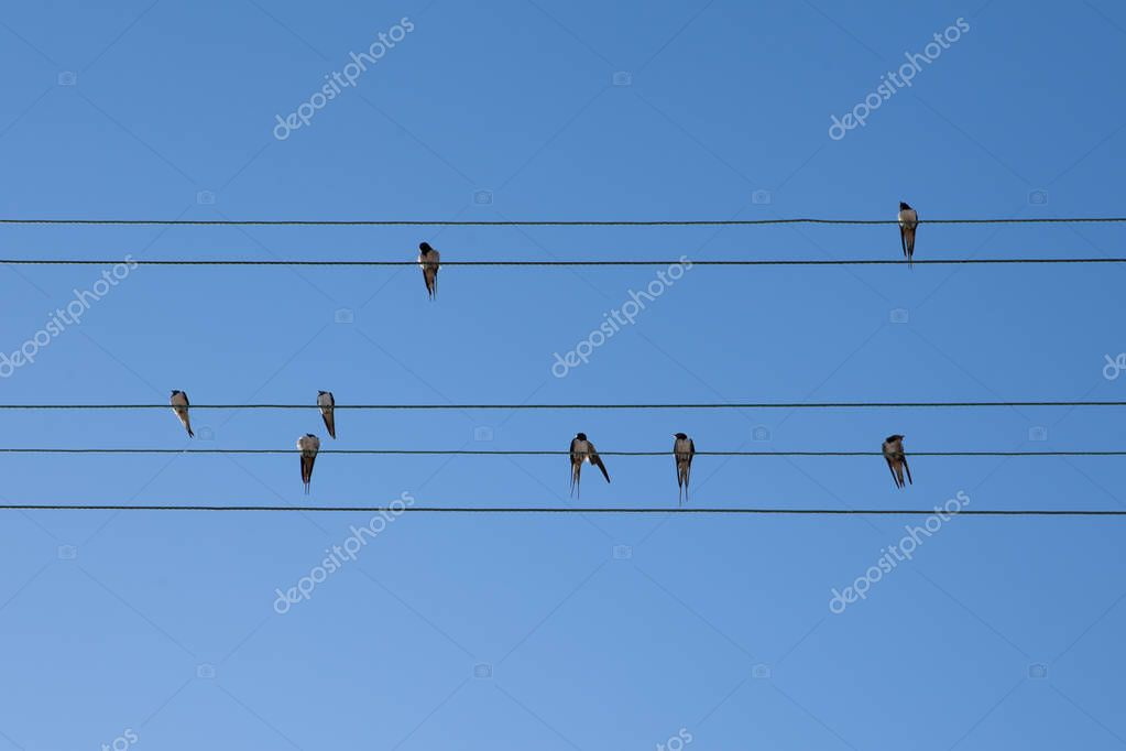 Group of swallows sitting on parallel wires like notes on stave on blue sky background