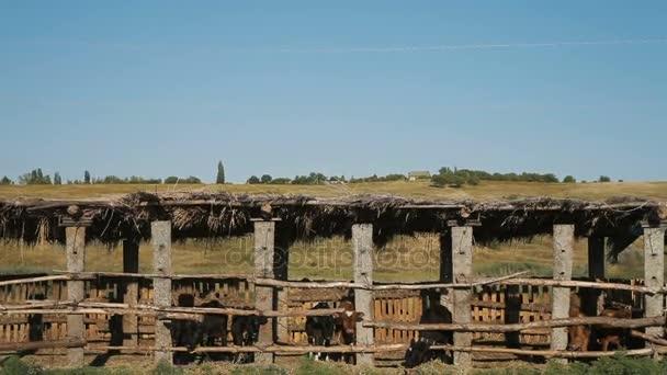 stádo krav v Kravíně na mléčné farmě