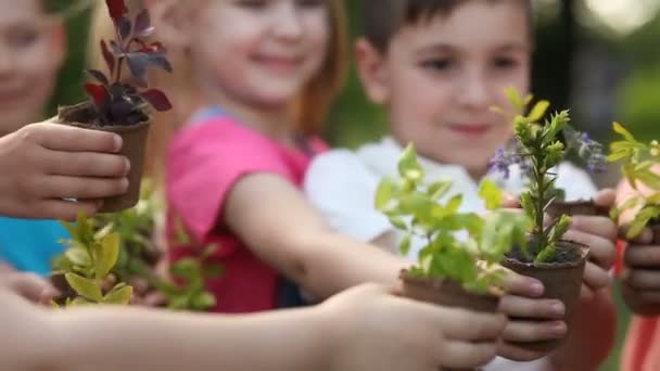 Children's hands holding sapling with plants