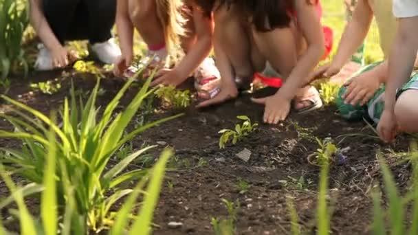 Kinderhände pflanzen Bäumchen auf Boden als weltweites Rettungskonzept
