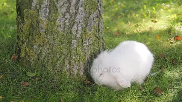 Bílý králík na zahradě
