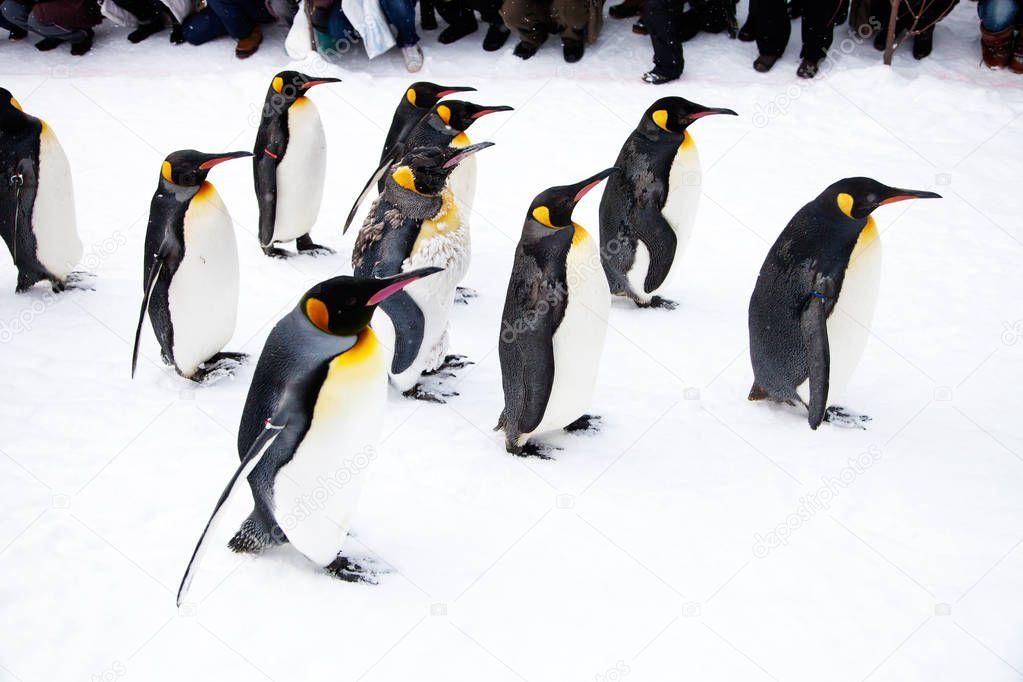 Penguins walking in zoo