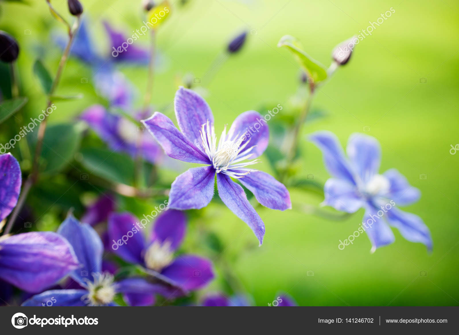 Pretty Summer Flowers Stock Photo Molka 141246702