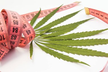 Marijuana and weight loss. Two green leaf of marijuana, hemp or cannabis entwined with measuring tape as symbol for slimming and weight loss. Use of medical marijuana in dietetics or nutrition science