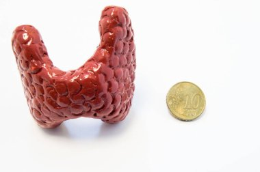 Concept of visualization of enlarged thyroid gland in various diseases, such as goiter, thyroiditis, nodule. Anatomical model of thyroid gland is located near 10 cent penny for size comparison of both