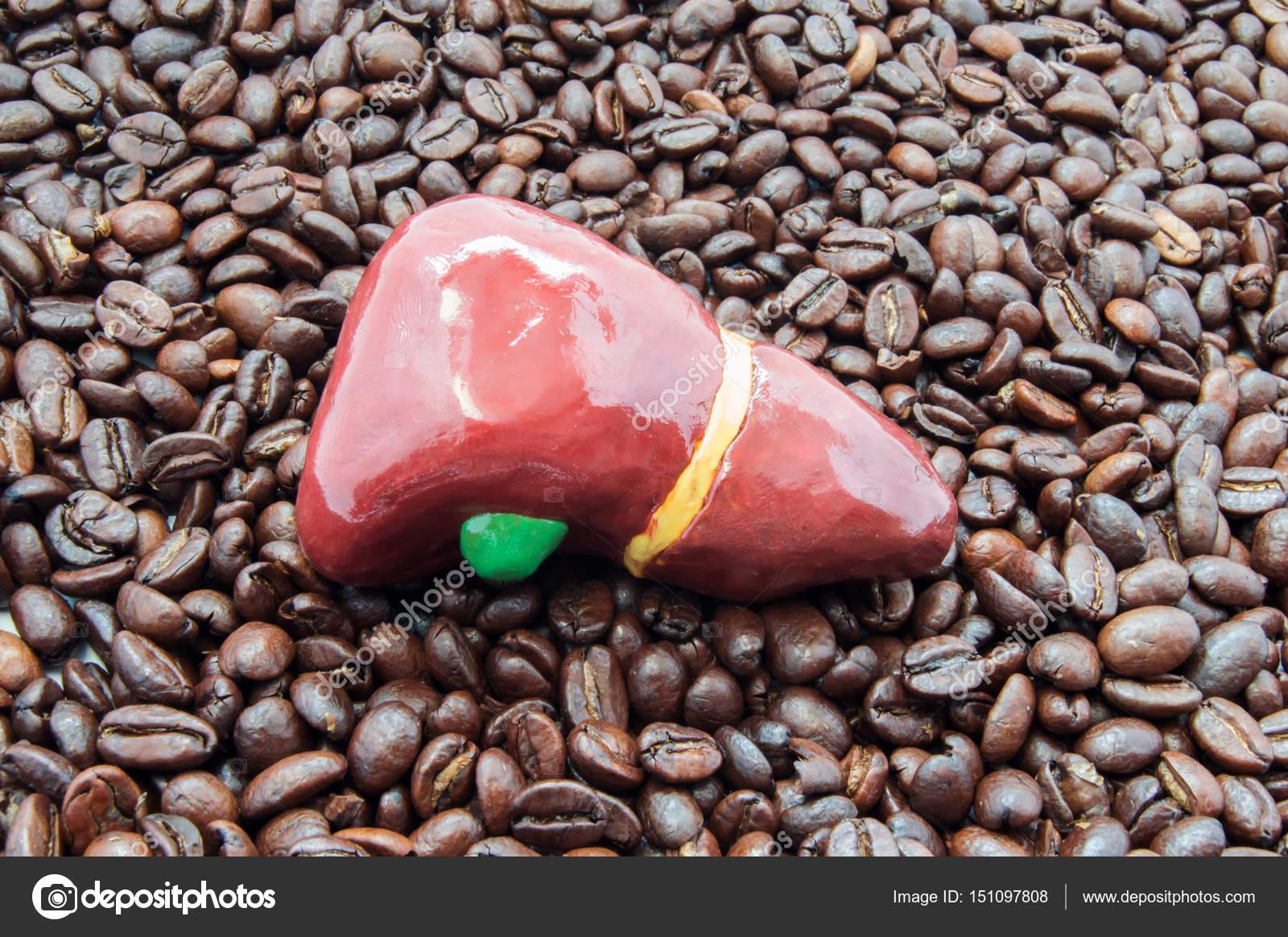 Hígado y café o cafeína. Figura hepática anatómica en asado café ...