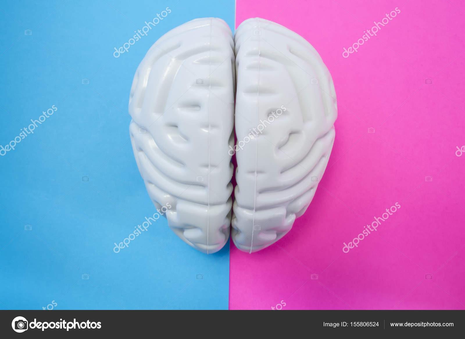 La figura del cerebro humano separa medio fondo rosa azul. El ...