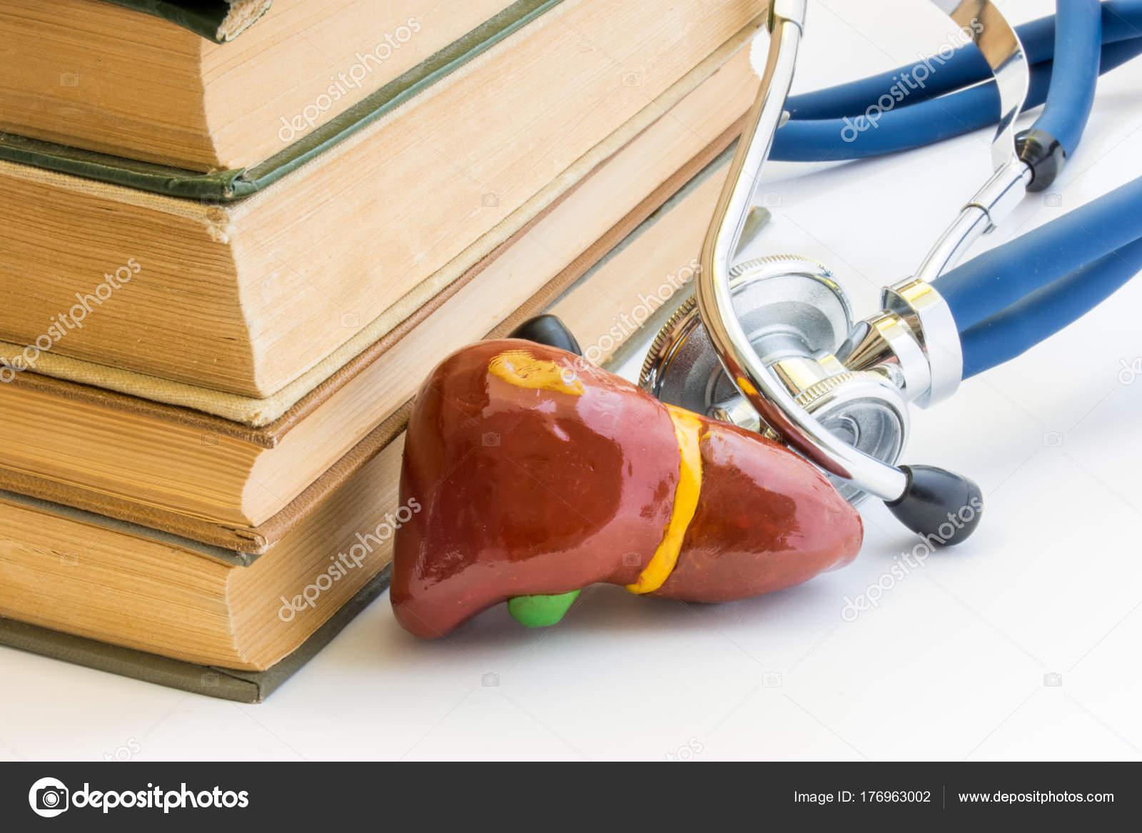 Foto Estudio Del Hígado Vesícula Biliar Anatomía Estructura Función ...